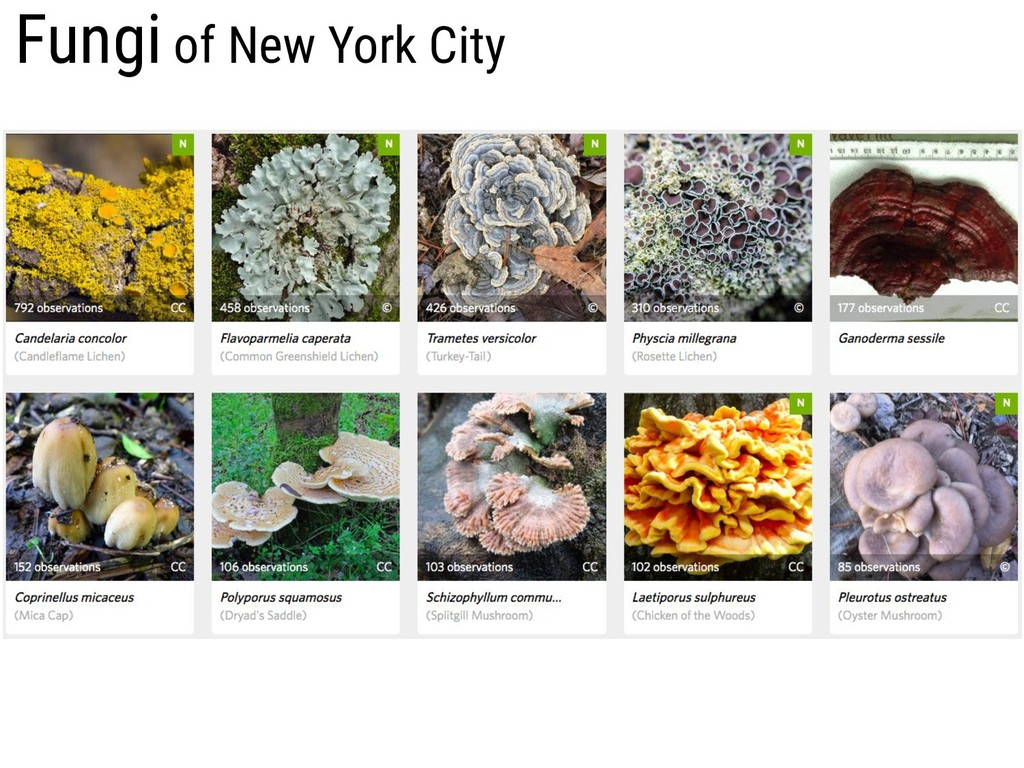 Fungi of New York City