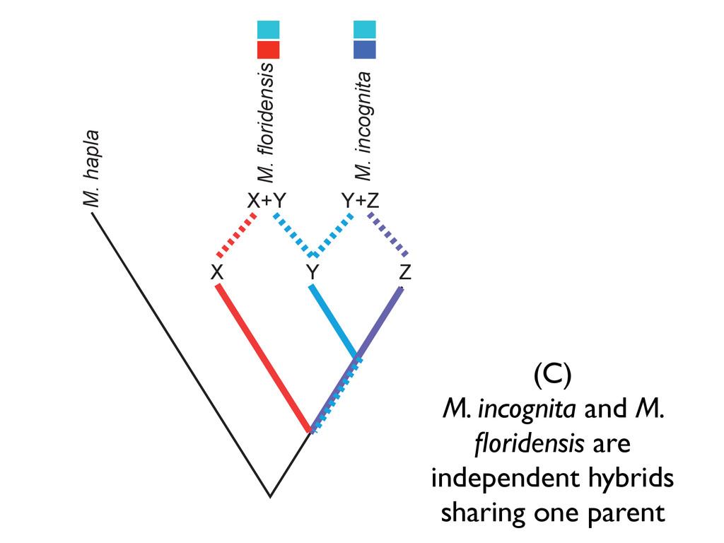 M. hapla X Y Z M. floridensis M. incognita X+Y ...