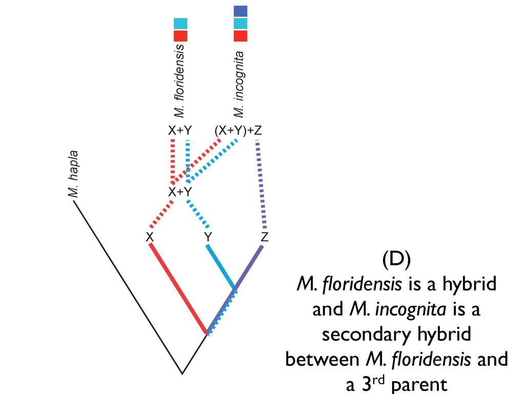 Z M. hapla X Y Z M. floridensis M. incognita X+...