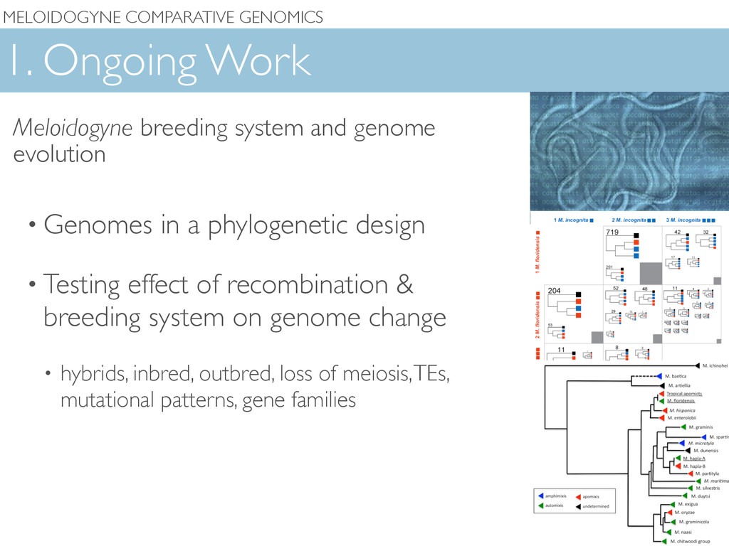 MELOIDOGYNE COMPARATIVE GENOMICS 1. Ongoing Wor...