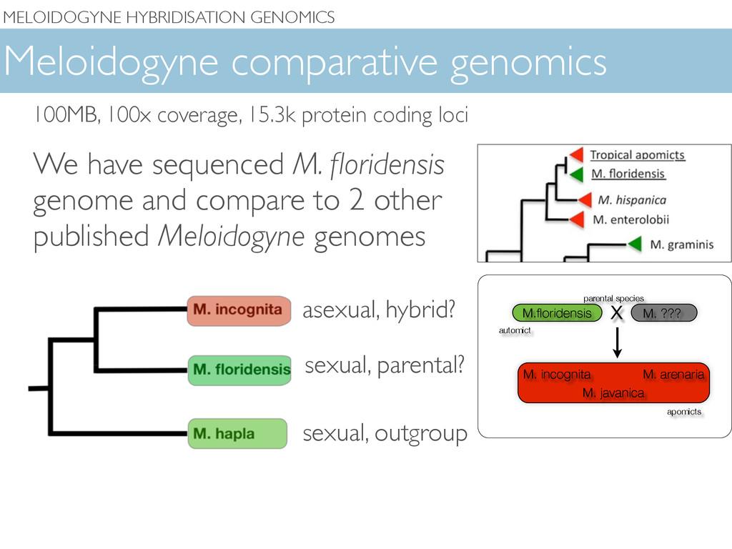 MELOIDOGYNE HYBRIDISATION GENOMICS Meloidogyne ...