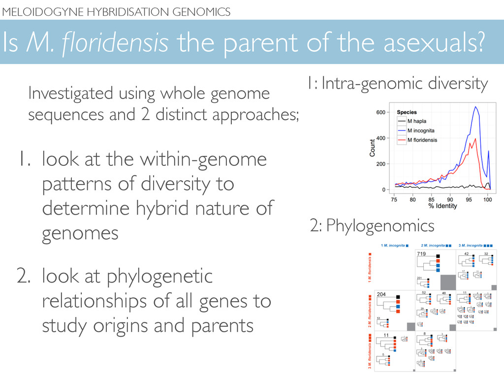 Is M. floridensis the parent of the asexuals? 1....