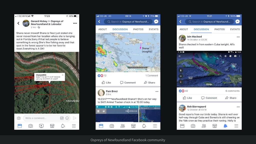 Ospreys of Newfoundland Facebook community