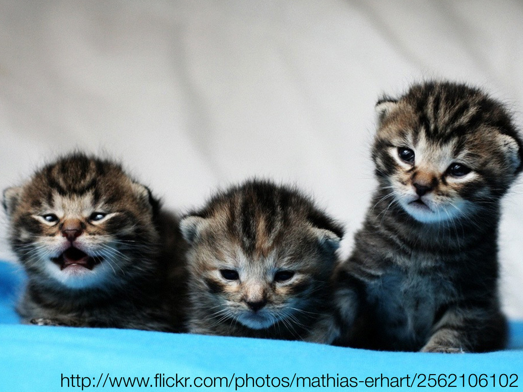 http://www.flickr.com/photos/mathias-erhart/2562...