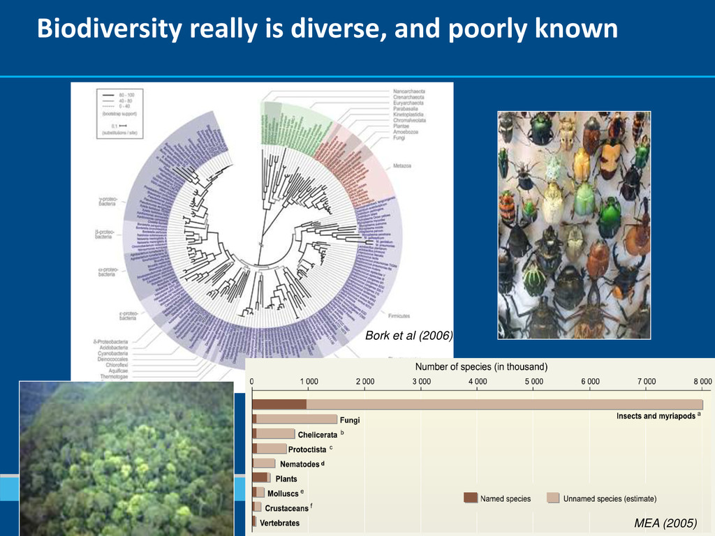 Biodiversity really is diverse, and poorly know...