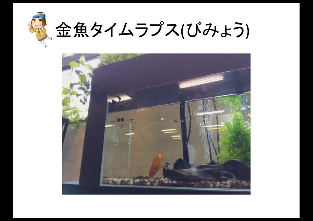 金魚タイムラプス(びみょう)