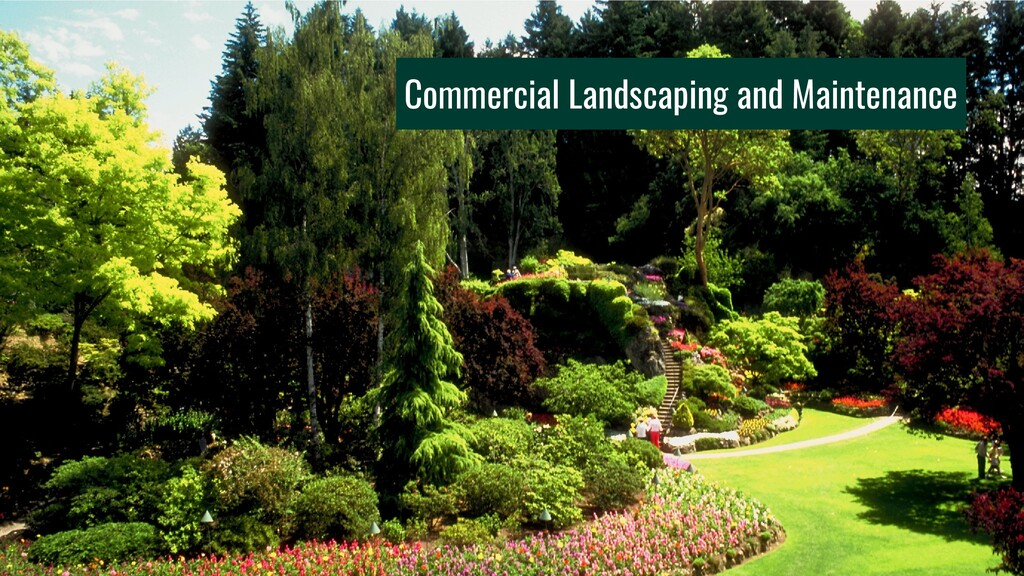 Commercial Landscaping and Maintenance