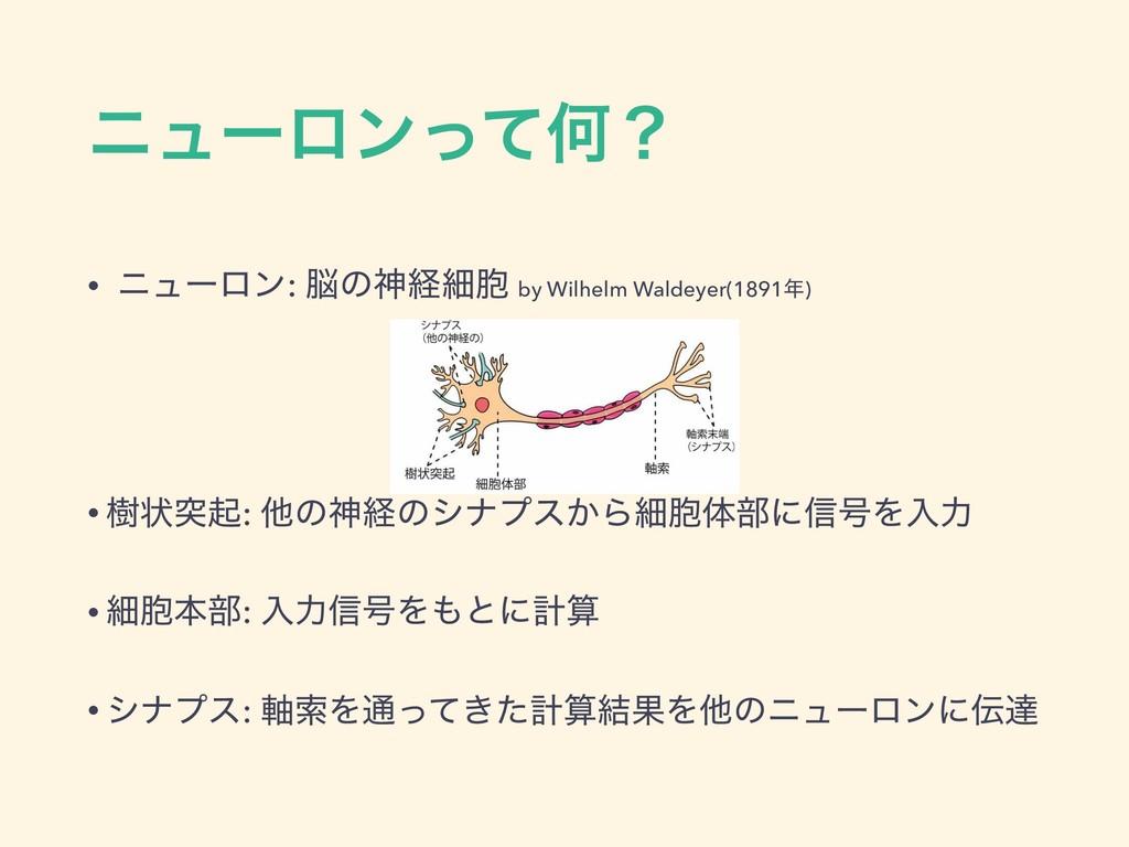χϡʔϩϯͬͯԿʁ • χϡʔϩϯ: ͷਆܦࡉ๔ by Wilhelm Waldeyer(1...