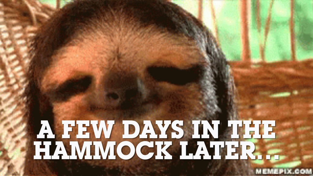 A FEW DAYS IN THE HAMMOCK LATER…