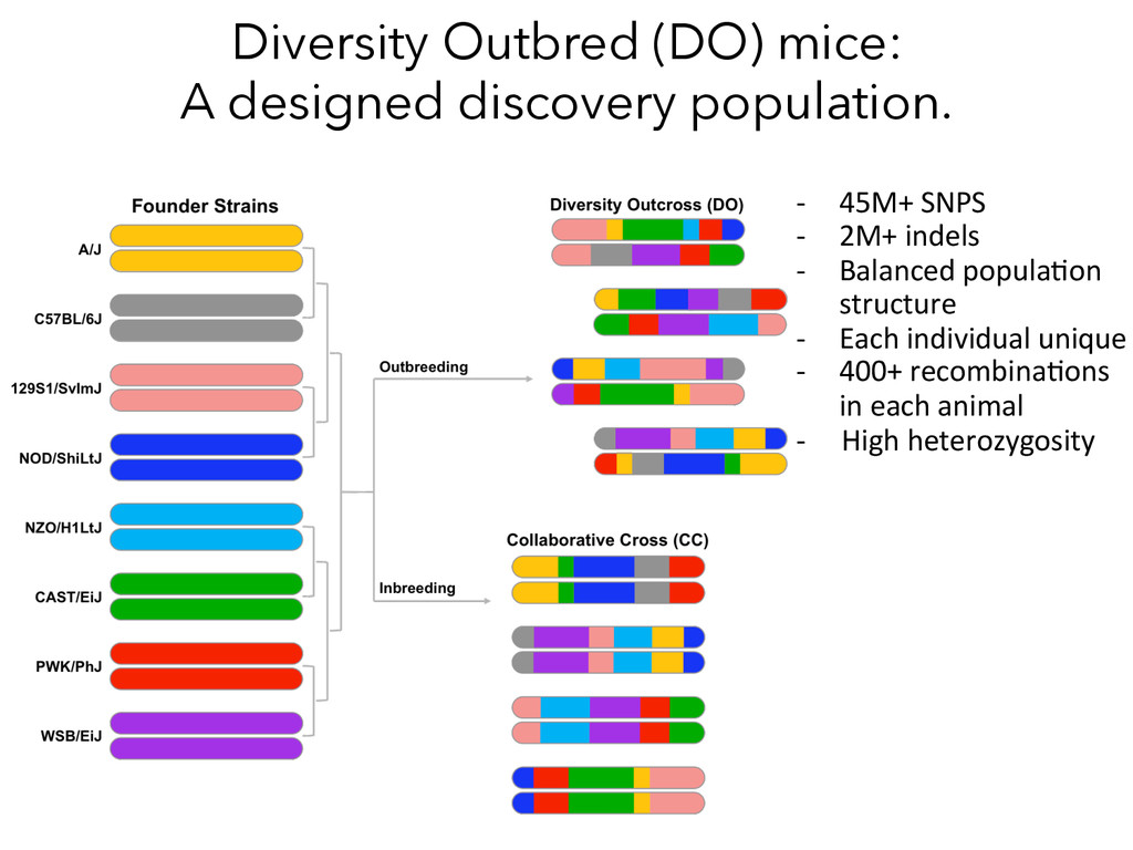 Diversity Outbred (DO) mice: A designed discove...