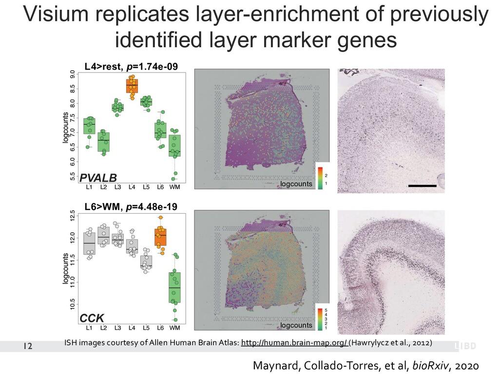 12 ISH images courtesy of Allen Human Brain Atl...