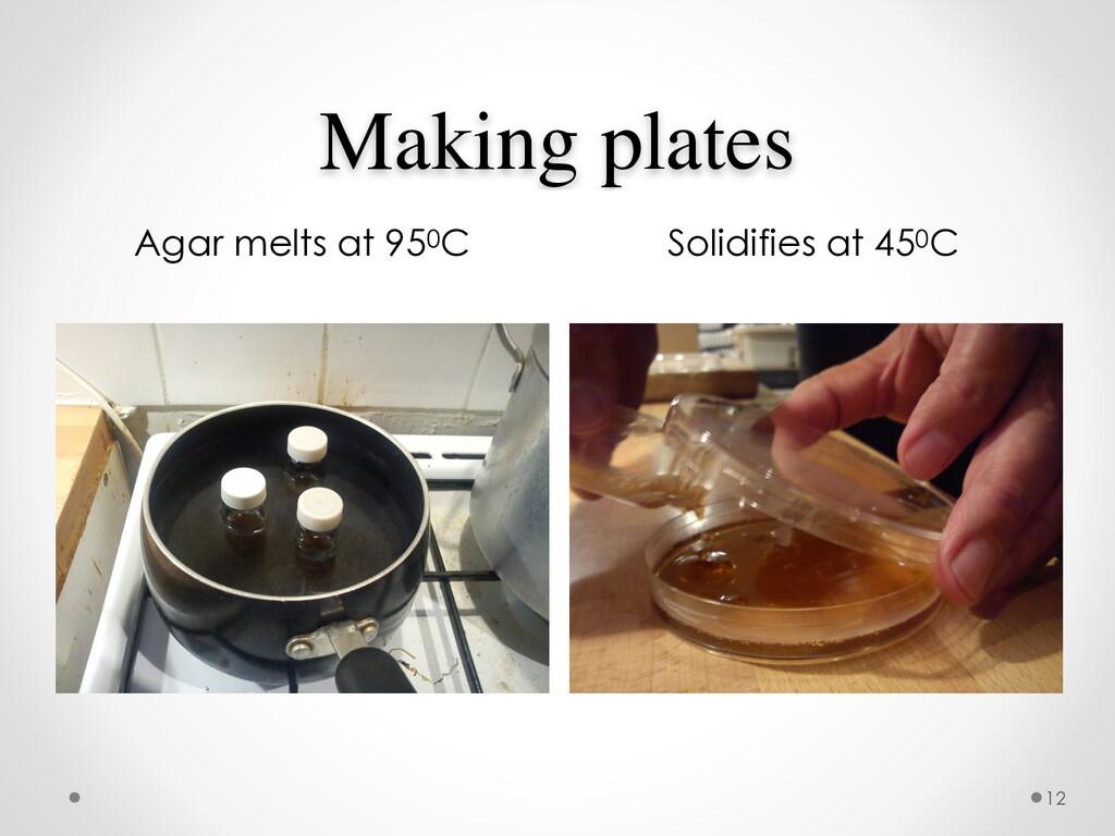 Making plates Agar melts at 950C Solidifies at ...