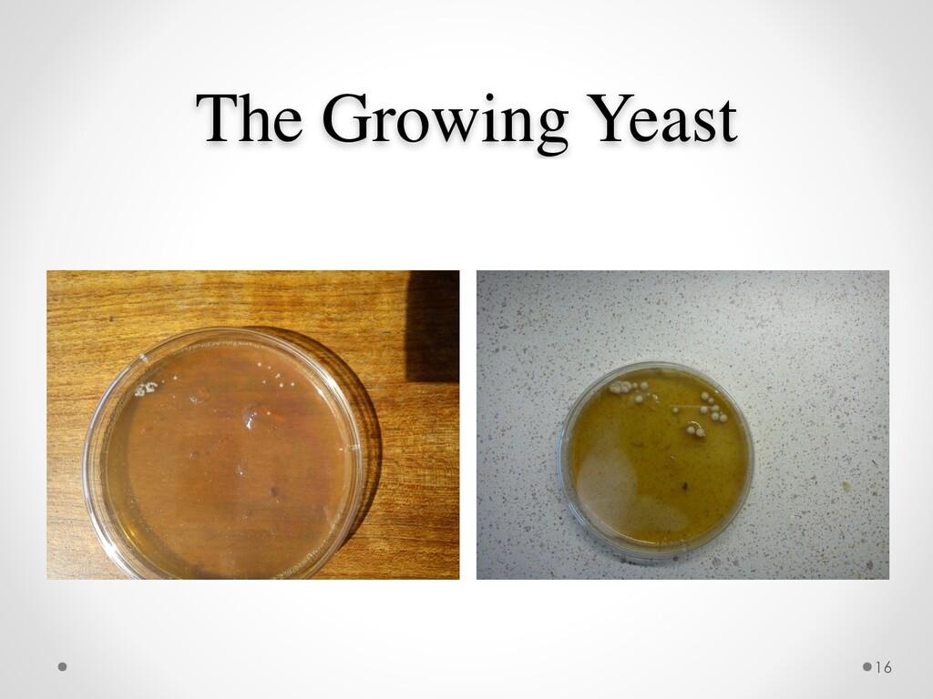 The Growing Yeast 16