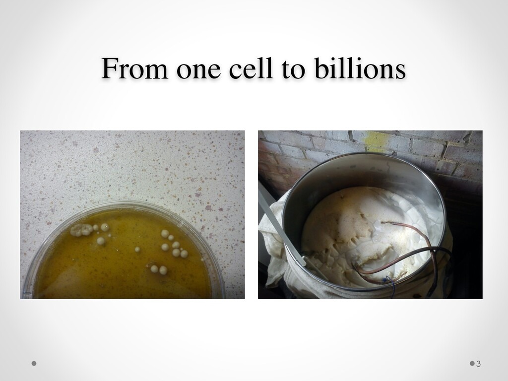 From one cell to billions 3