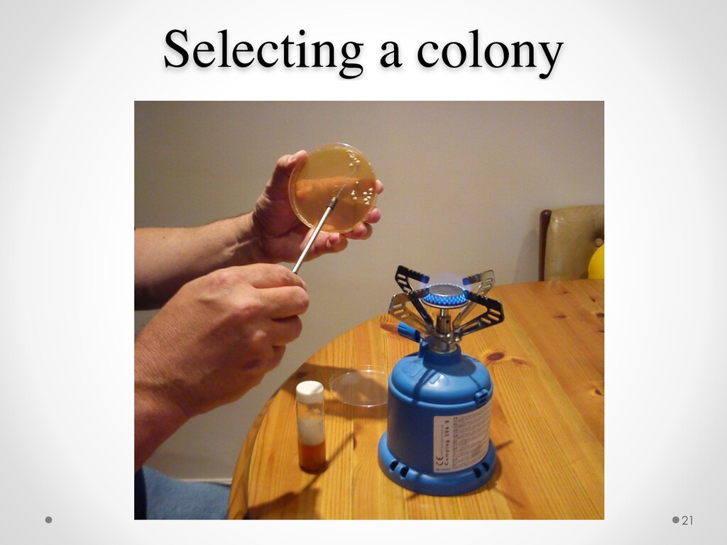 Selecting a colony 21