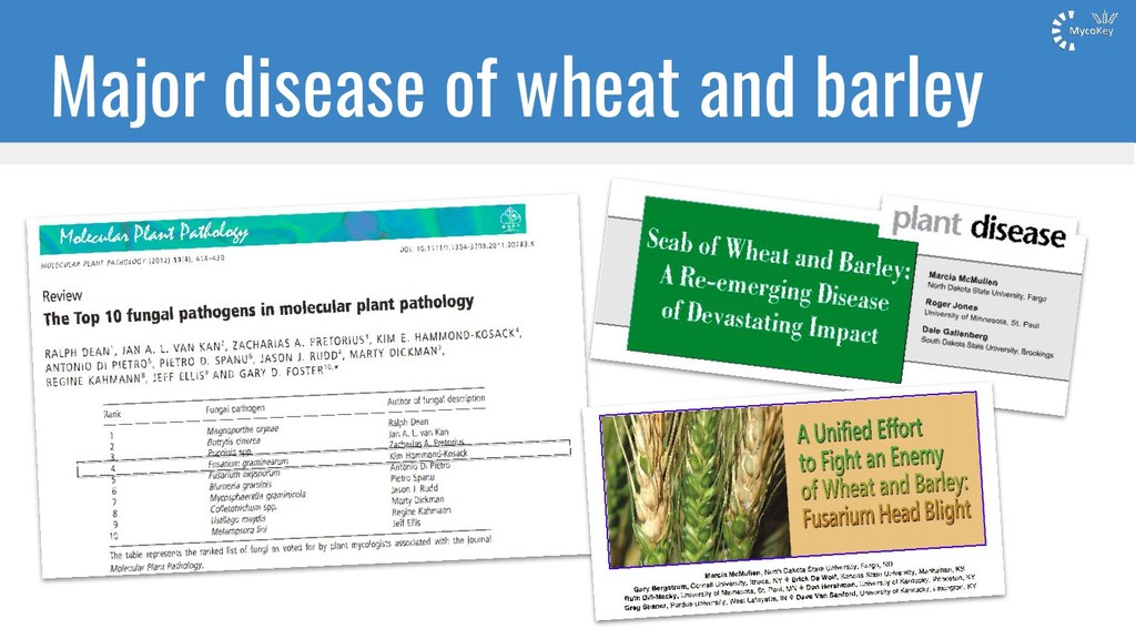 Major disease of wheat and barley