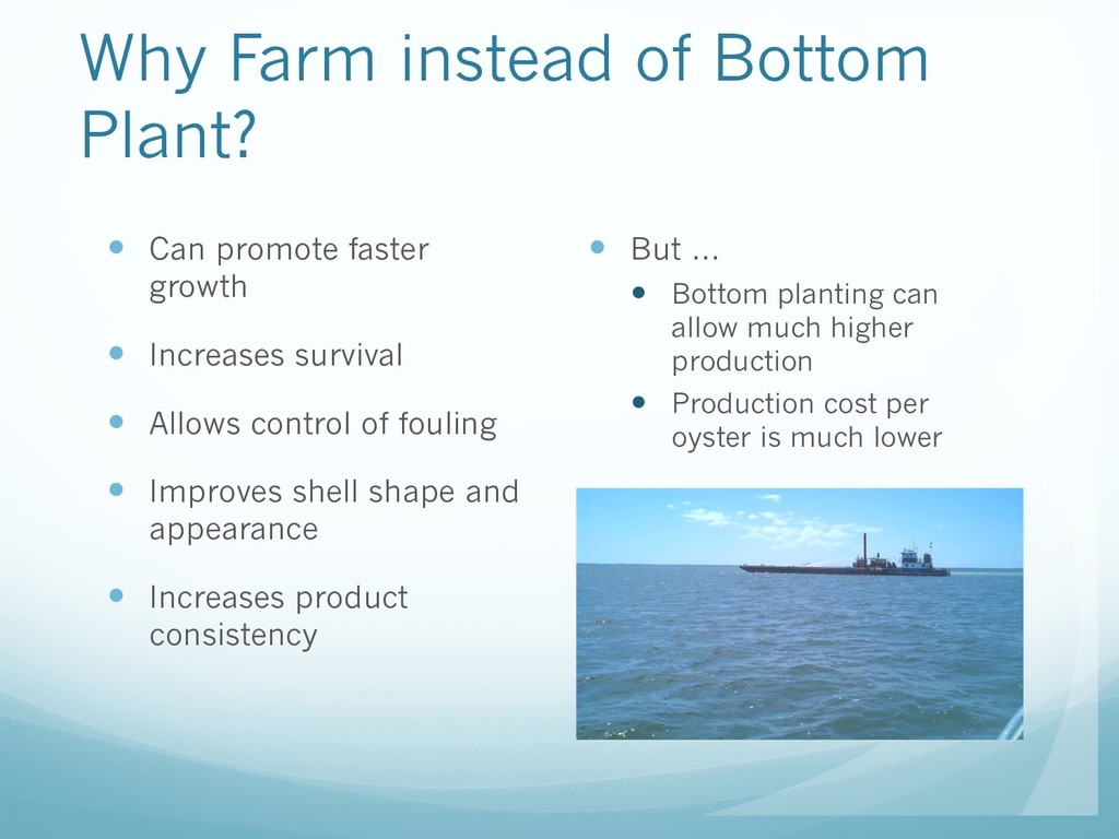 Why Farm instead of Bottom Plant? — But … — Bot...
