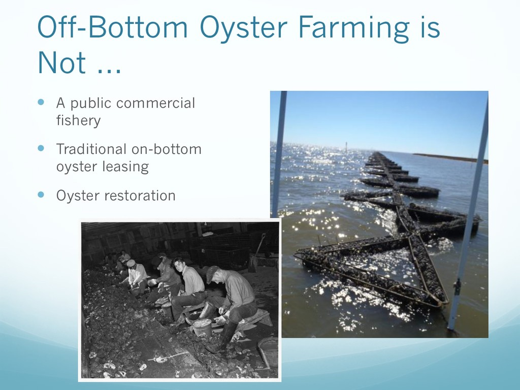 Off-Bottom Oyster Farming is Not … — A public c...