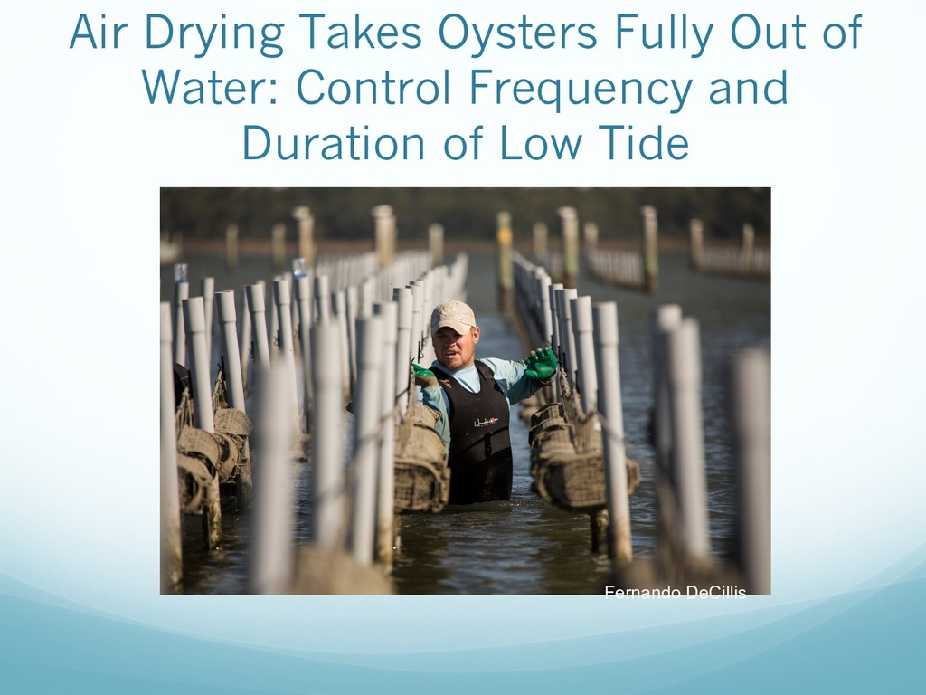Air Drying Takes Oysters Fully Out of Water: Co...