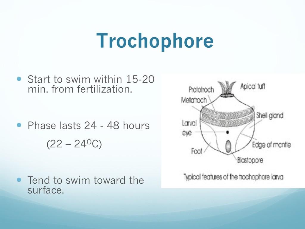 Trochophore — Start to swim within 15-20 min. f...