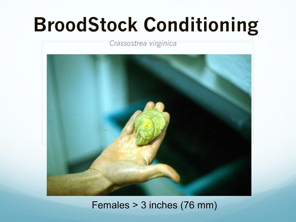 BroodStock Conditioning Crassostrea virginica F...