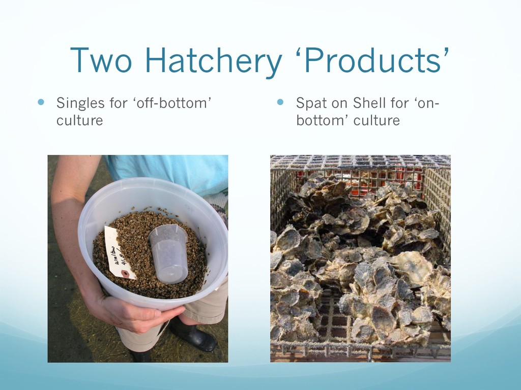 Two Hatchery 'Products' — Singles for 'off-bott...