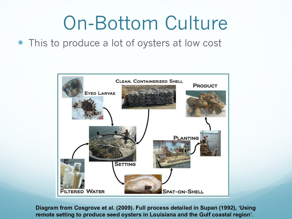 On-Bottom Culture — This to produce a lot of oy...