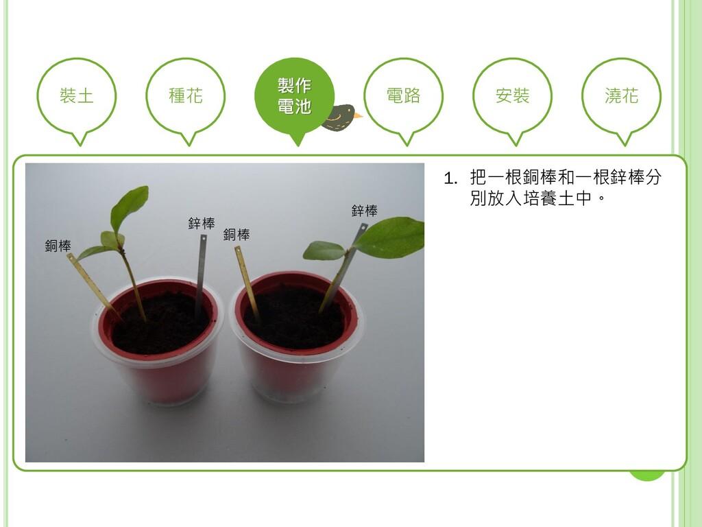 裝土 種花 製作 電池 電路 安裝 澆花 1. 把一根銅棒和一根鋅棒分 別放入培養土中。 鋅棒...