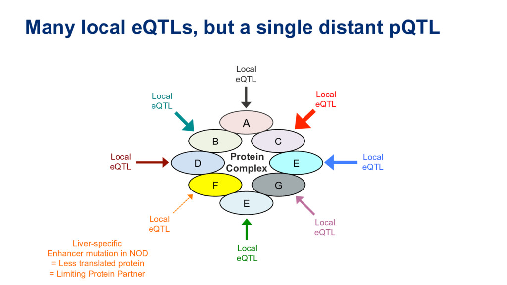 Many local eQTLs, but a single distant pQTL Loc...