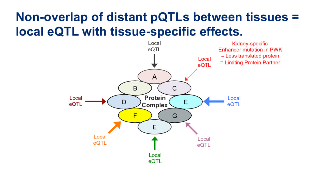 Non-overlap of distant pQTLs between tissues = ...
