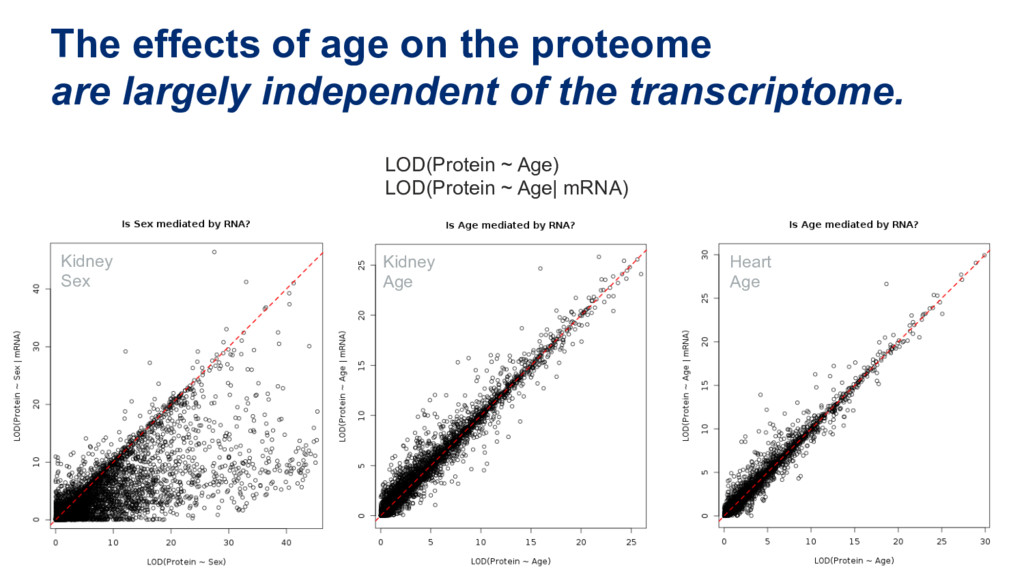 The effects of age on the proteome are largely ...