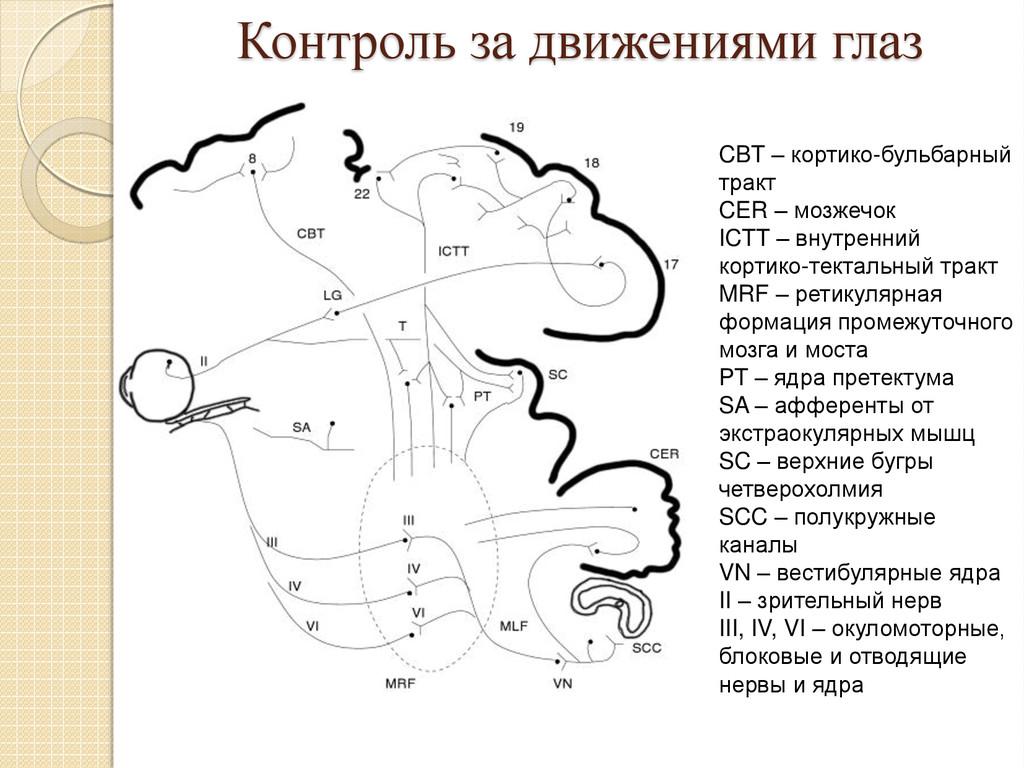 Контроль за движениями глаз CBT – кортико-бульб...