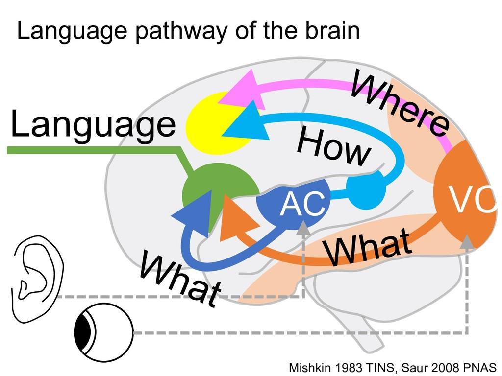 AC VC Language Mishkin 1983 TINS, Saur 2008 PNA...