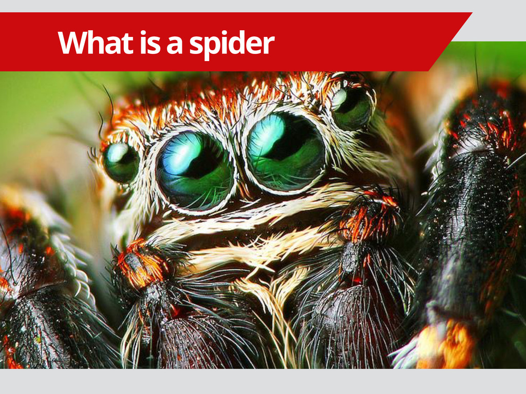 What is a spider