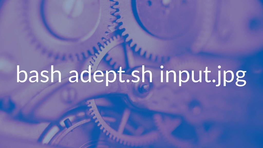 bash%adept.sh%input.jpg