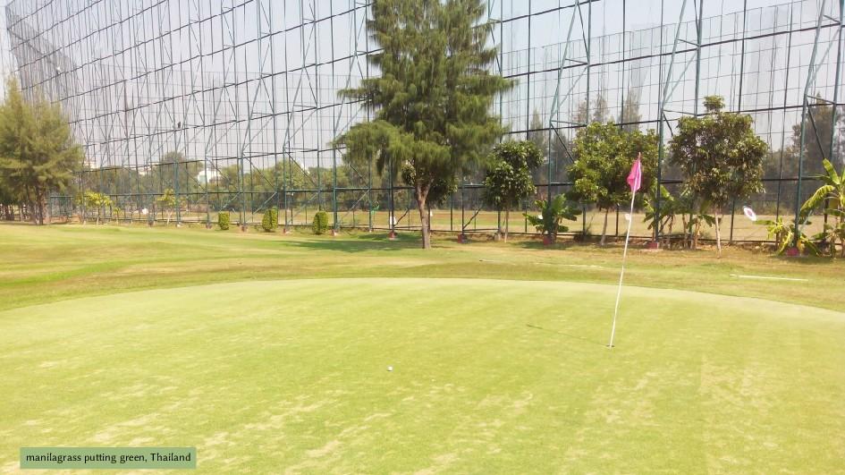 manilagrass putting green, Thailand
