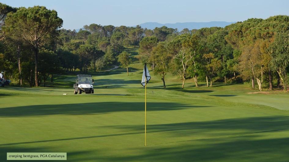 creeping bentgrass, PGA Catalunya