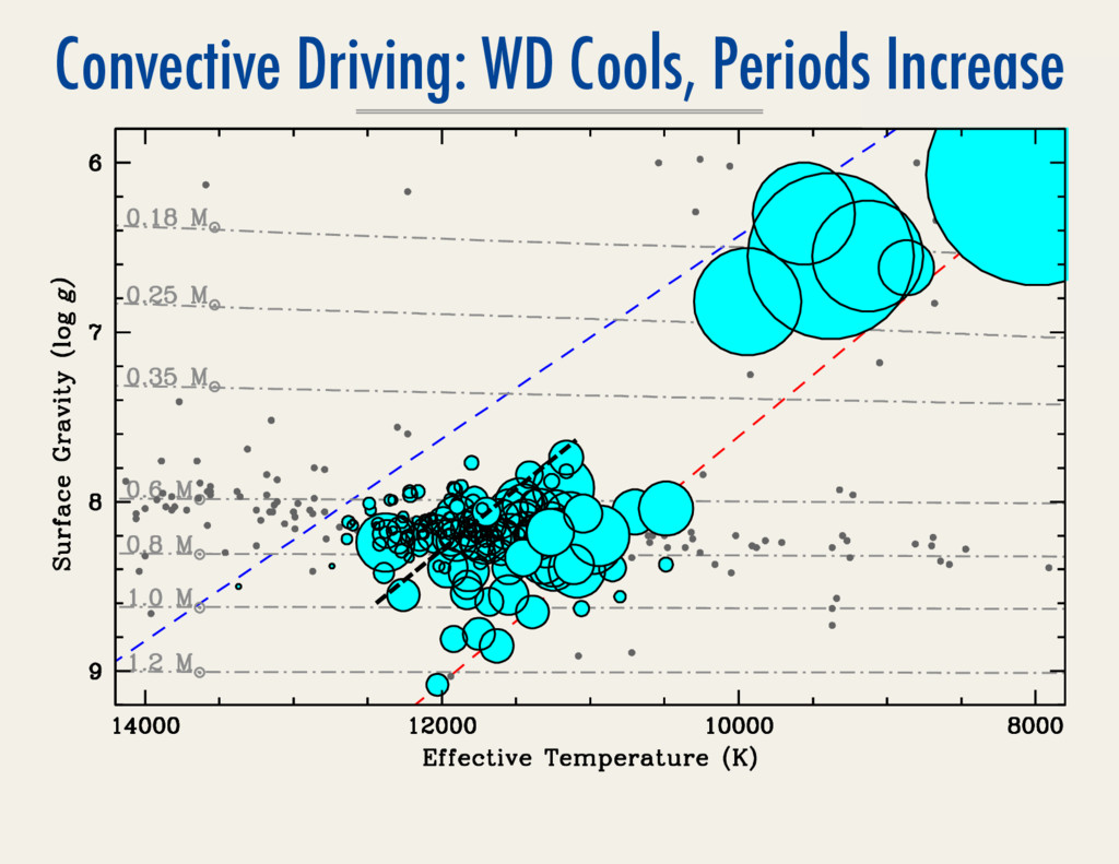 Convective Driving: WD Cools, Periods Increase