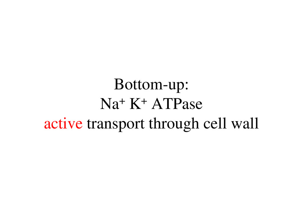Bottom-up: Na+ K+ ATPase active transport throu...
