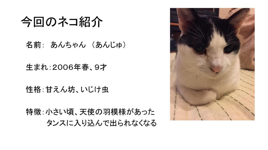 今回のネコ紹介 名前: あんちゃん (あんじゅ) 生まれ:2006年春、9才 性格:甘えん坊、...
