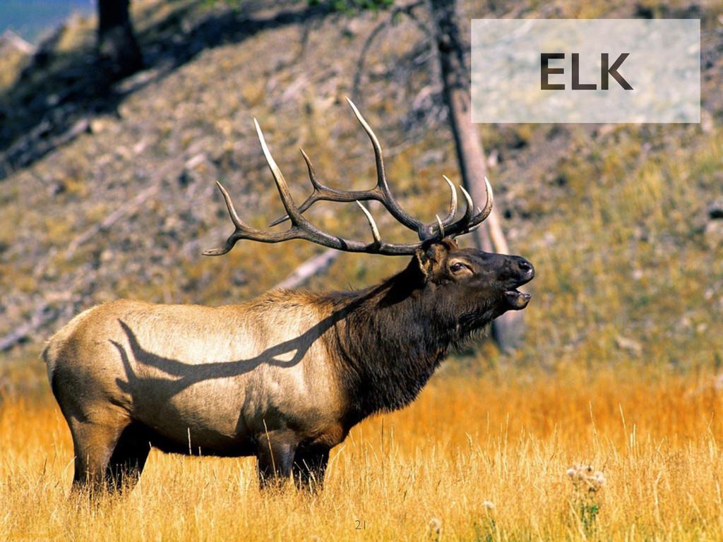 ELK 21