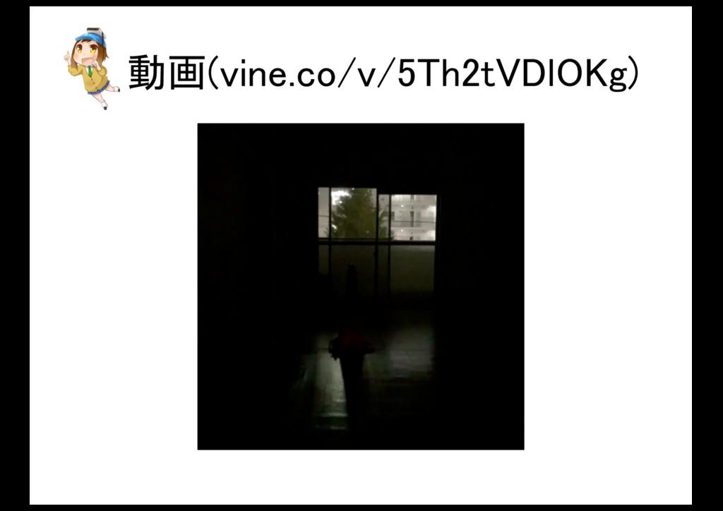 動画(vine.co/v/5Th2tVDlOKg)