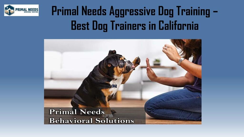 Primal Needs Aggressive Dog Training – Best Dog...