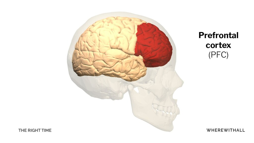 Prefrontal cortex (PFC) THE RIGHT TIME