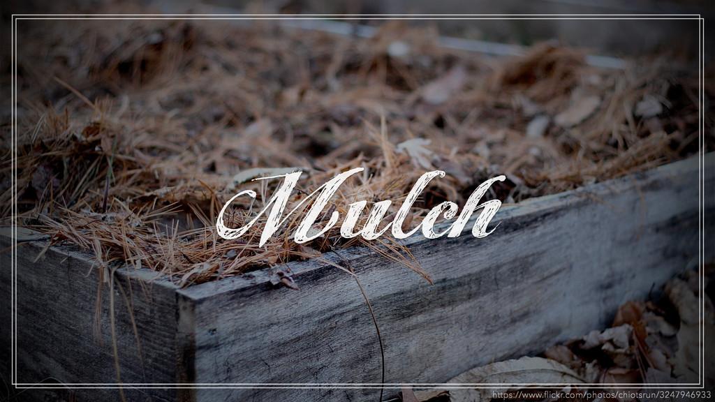 Mulch https://www.flickr.com/photos/chiotsrun/32...