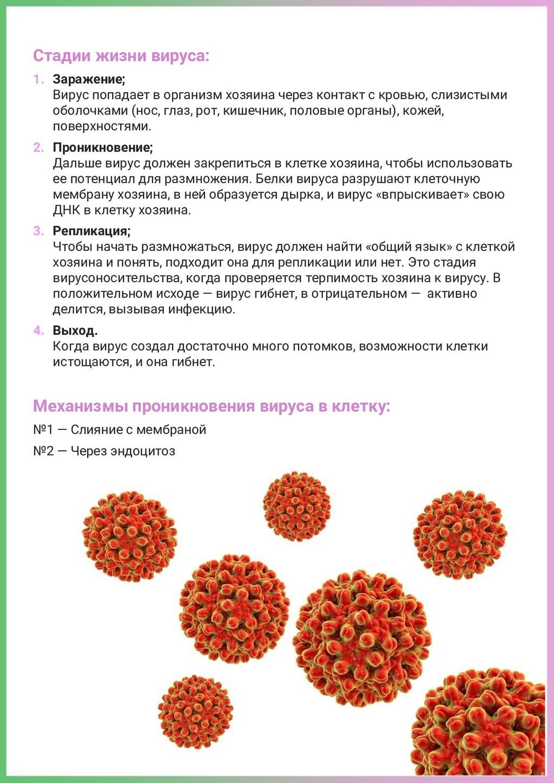 22 Стадии жизни вируса: 1. Заражение; Вирус поп...