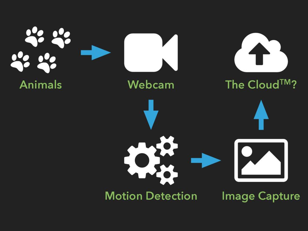 Animals Webcam Motion Detection Image Capture T...