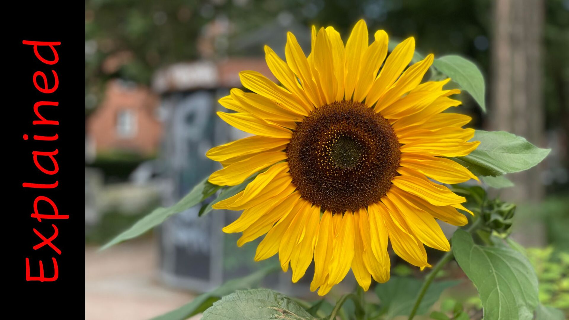 Collaborative Modeling