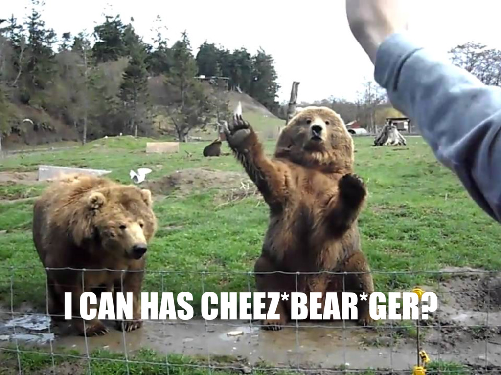 I CAN HAS CHEEZ*BEAR*GER?