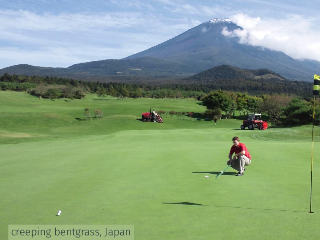creeping bentgrass, Japan